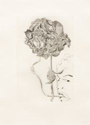 """Pessimist Rose"" (1989) by Francesco Clemente"
